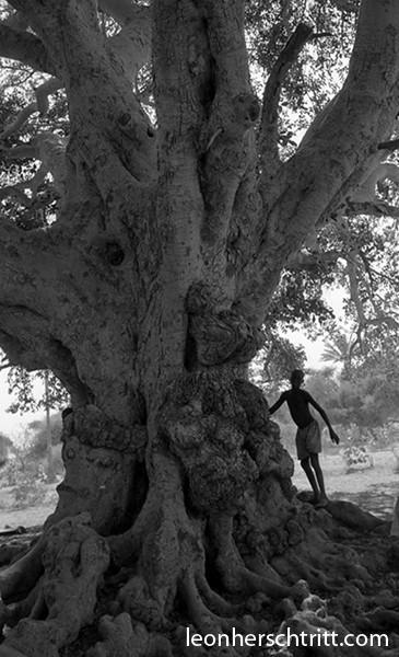 arbretchad